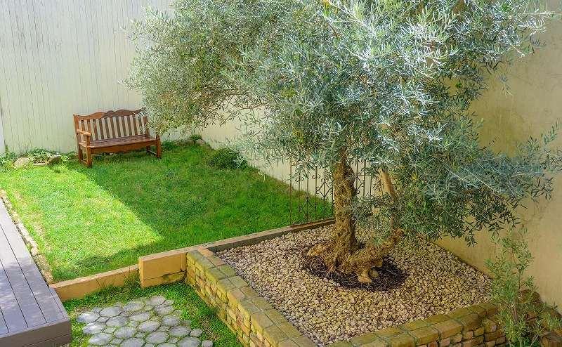 【ガーデン】天然の芝生は冬場に強いので美しいグリーンを保ちます。オリーヴは樹齢200年のシンボルツリーです。