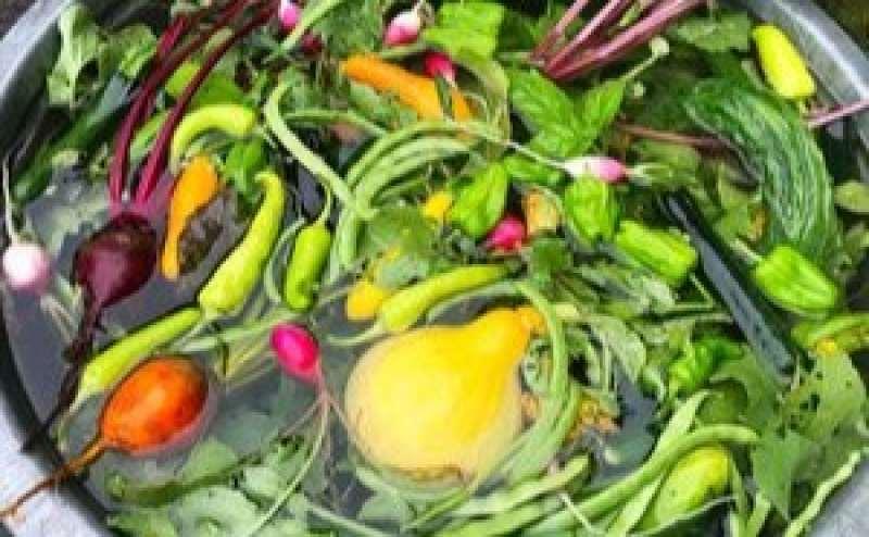 みずみずしい無農薬野菜は甘みたっぷり