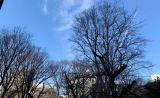 窓から西池袋公園が見えます。景色よし。