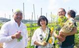 アトリエキッチン鎌倉では、無農薬野菜の菜園も経営しています